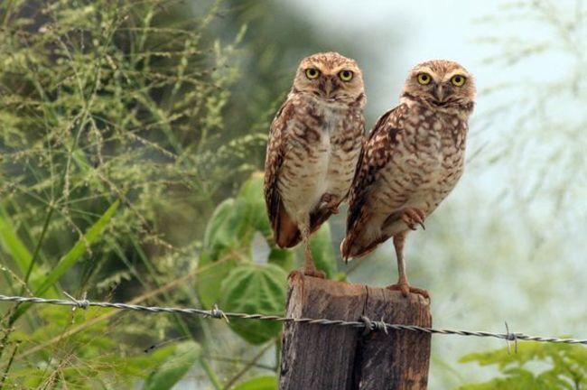 Estas-fotos-provam-que-as-corujas-são-aves-magníficas-Blog-Animal (18)