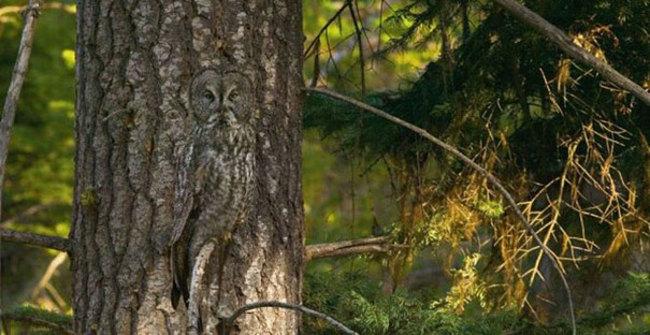Estas-fotos-provam-que-as-corujas-são-aves-magníficas-Blog-Animal (20)