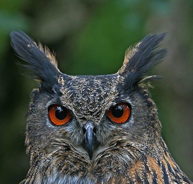 Estas-fotos-provam-que-as-corujas-são-aves-magníficas-Blog-Animal (22)