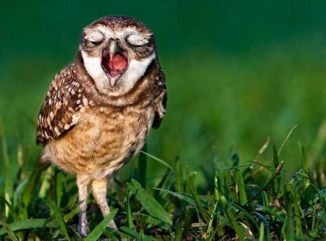 Estas-fotos-provam-que-as-corujas-são-aves-magníficas-Blog-Animal (23)