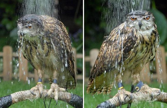 Estas-fotos-provam-que-as-corujas-são-aves-magníficas-Blog-Animal (24)