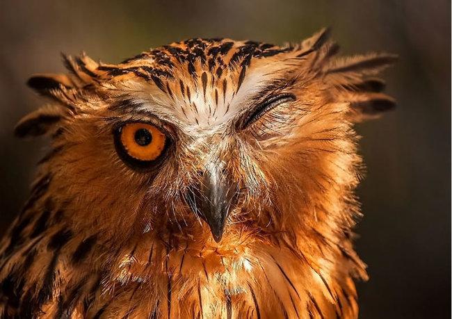 Estas fotos provam que as corujas são aves magníficas