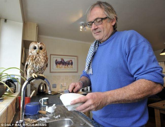 Estas-fotos-provam-que-as-corujas-são-aves-magníficas-Blog-Animal (26)
