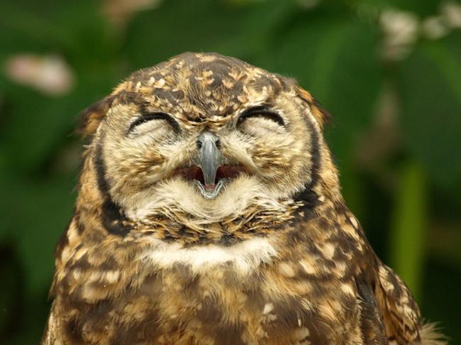 Estas-fotos-provam-que-as-corujas-são-aves-magníficas-Blog-Animal (4)