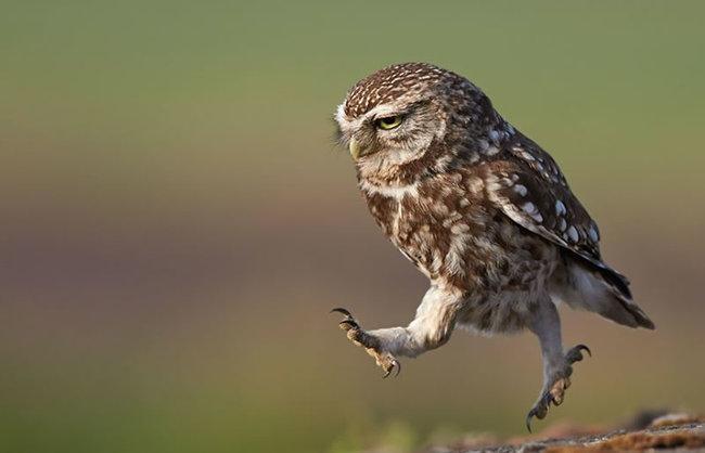 Estas-fotos-provam-que-as-corujas-são-aves-magníficas-Blog-Animal (5)