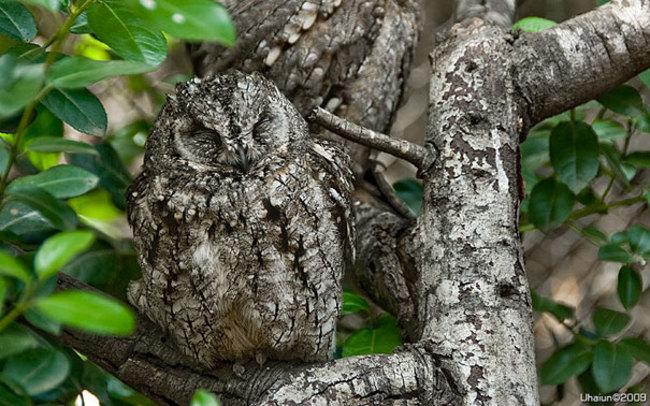 Estas-fotos-provam-que-as-corujas-são-aves-magníficas-Blog-Animal (6)