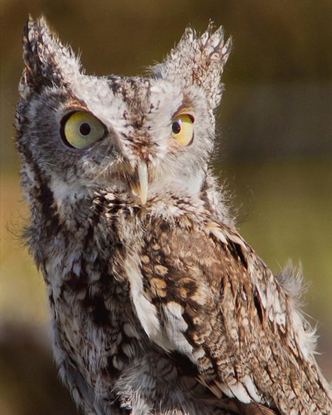 Estas-fotos-provam-que-as-corujas-são-aves-magníficas-Blog-Animal (8)