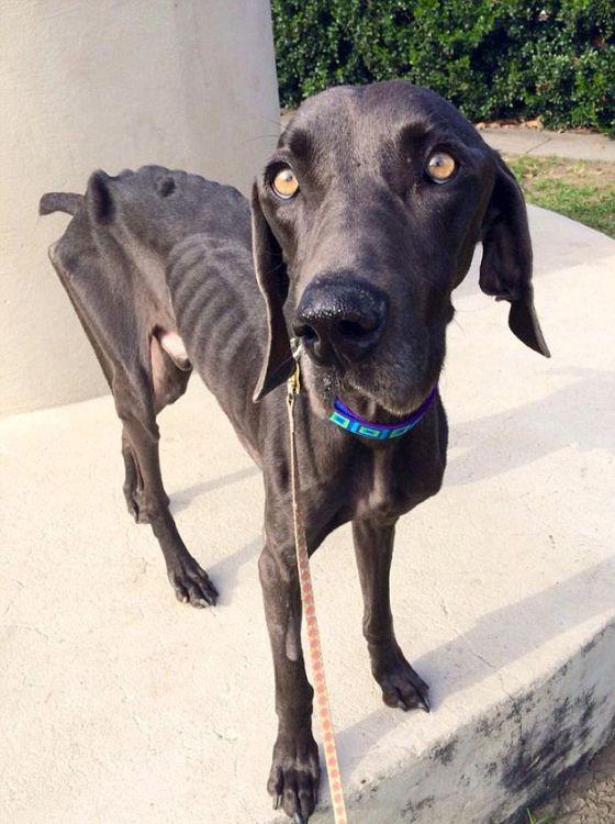 Este cão chegou à beira da morte e se recuperou (2)