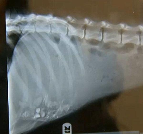 Este cão chegou à beira da morte e se recuperou (6)