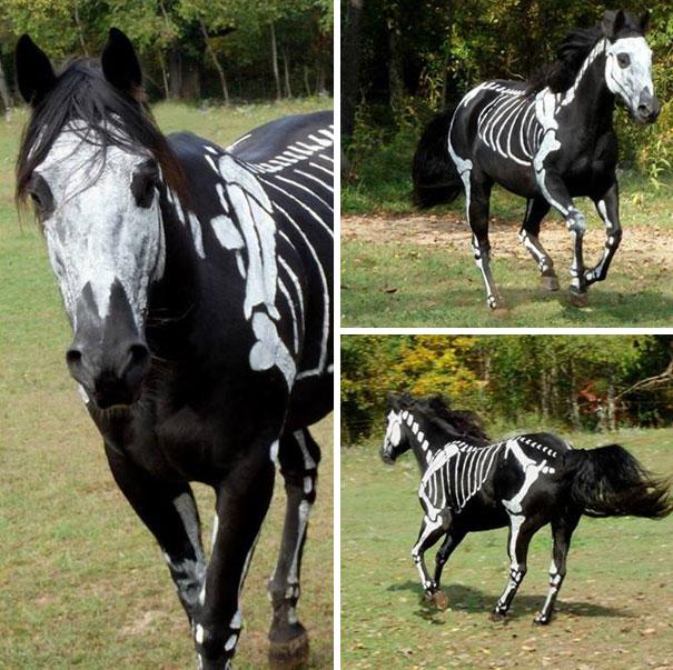 Fantasias de Halloween para animais (12)