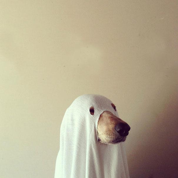 Fantasias de Halloween para animais (25)