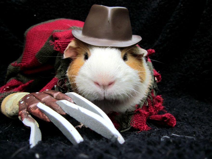 Fantasias de Halloween para animais (4)