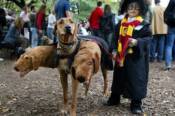 Fantasias de Halloween para animais (7)