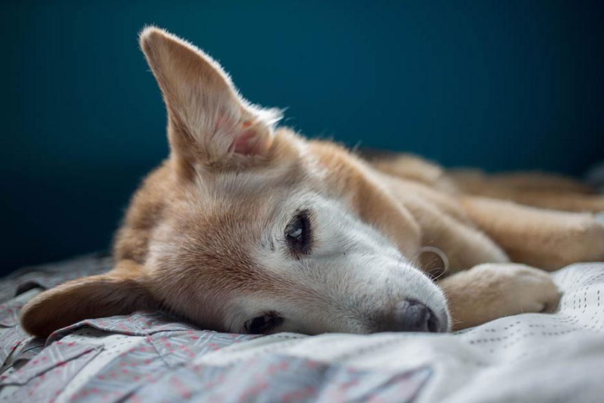 Fotógrafa-cria-álbum-comovente-de-despedida-de-seu-cão (12)