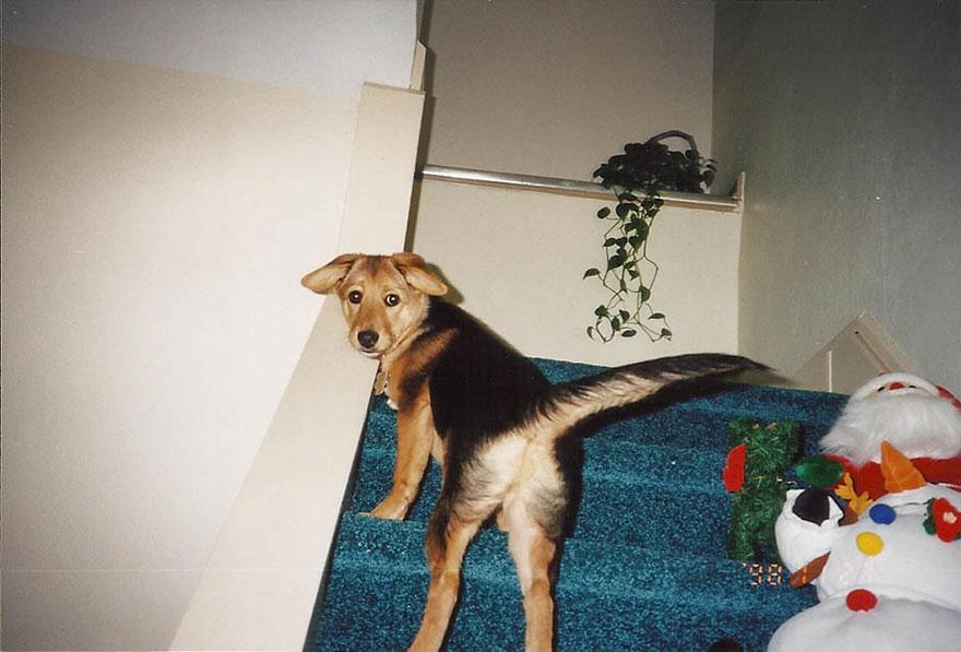 Fotógrafa-cria-álbum-comovente-de-despedida-de-seu-cão (19)