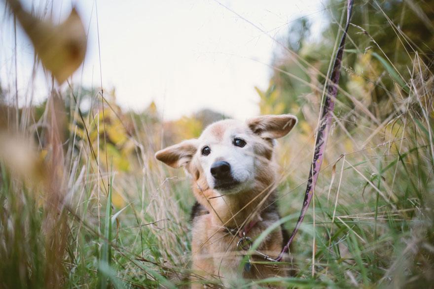 Fotógrafa-cria-álbum-comovente-de-despedida-de-seu-cão (4)