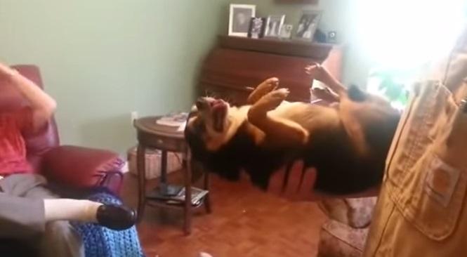 O cãozinho que se finge de morto quando é pego por estranho