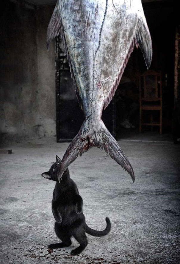 Os-flagrantes-mais-engraçados-de-gatos-sendo-pegos-roubando-comida-Blog-Animal (1)