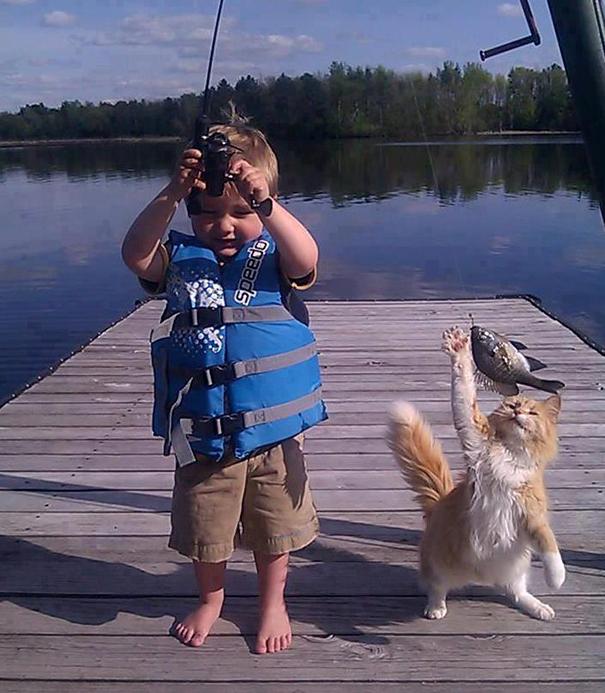Os-flagrantes-mais-engraçados-de-gatos-sendo-pegos-roubando-comida-Blog-Animal (13)