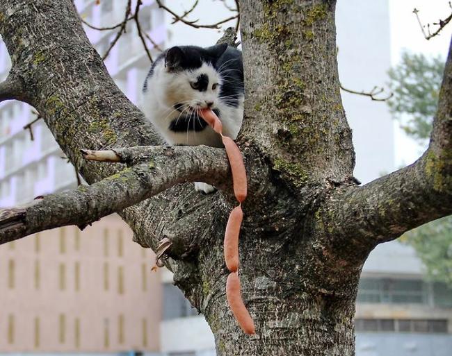 Os-flagrantes-mais-engraçados-de-gatos-sendo-pegos-roubando-comida-Blog-Animal (14)