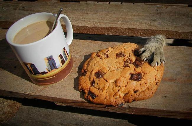 Os-flagrantes-mais-engraçados-de-gatos-sendo-pegos-roubando-comida-Blog-Animal (15)