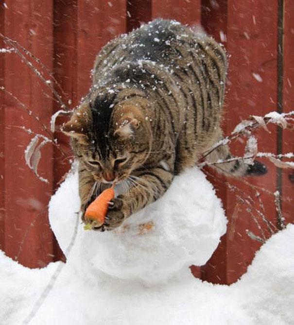 Os-flagrantes-mais-engraçados-de-gatos-sendo-pegos-roubando-comida-Blog-Animal (17)