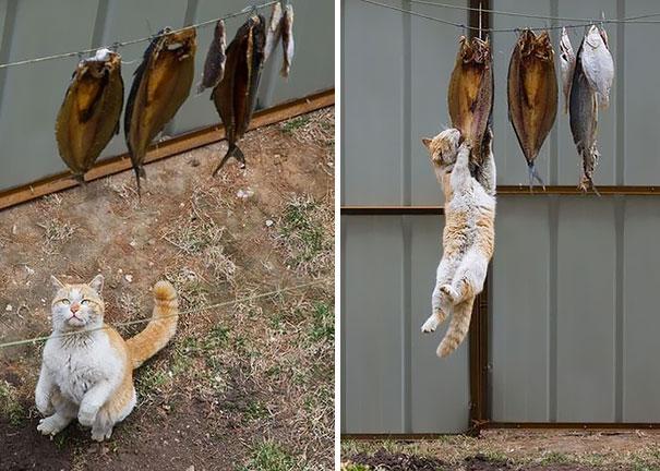 Os-flagrantes-mais-engraçados-de-gatos-sendo-pegos-roubando-comida-Blog-Animal (2)