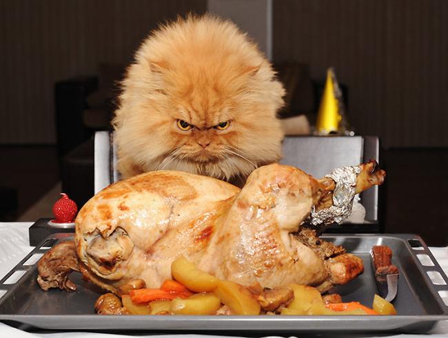 Os-flagrantes-mais-engraçados-de-gatos-sendo-pegos-roubando-comida-Blog-Animal (8)
