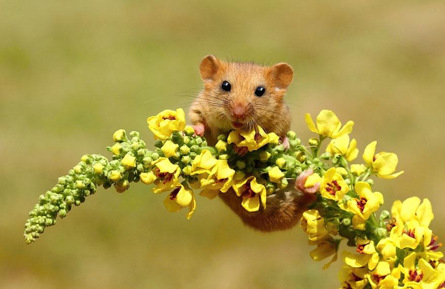 Pequenos camundongos selvagens (3)