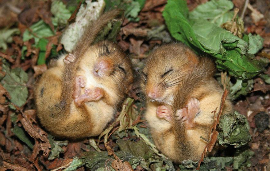 Pequenos camundongos selvagens (9)