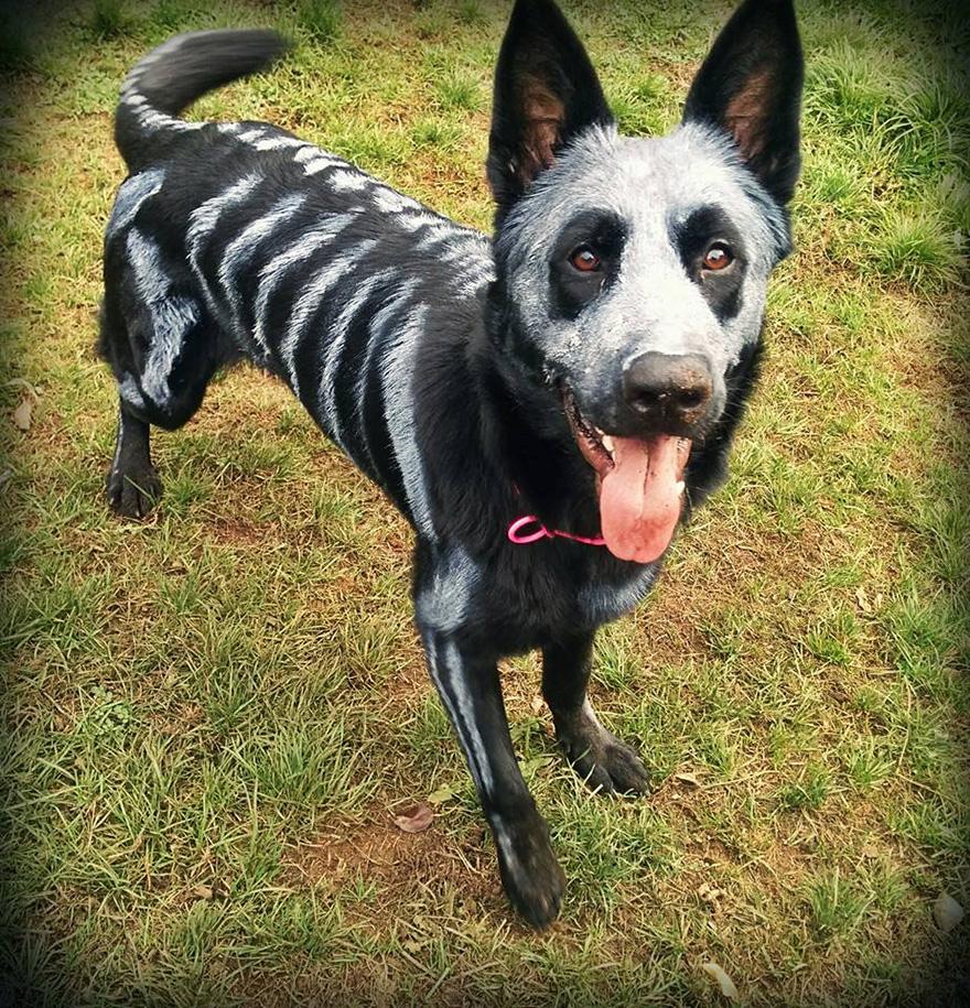 Uso não-tóxico de pintura para transformar animais esqueletos assustadores para o Halloween (1)