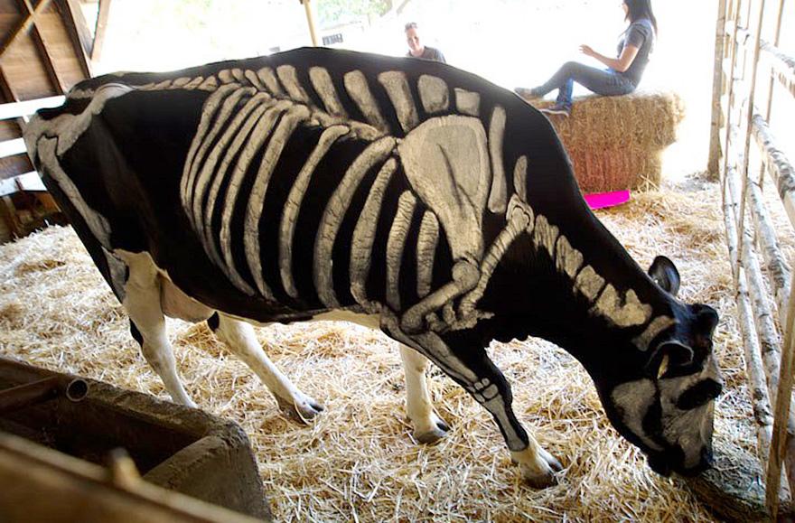 Uso não-tóxico de pintura para transformar animais esqueletos assustadores para o Halloween (3)