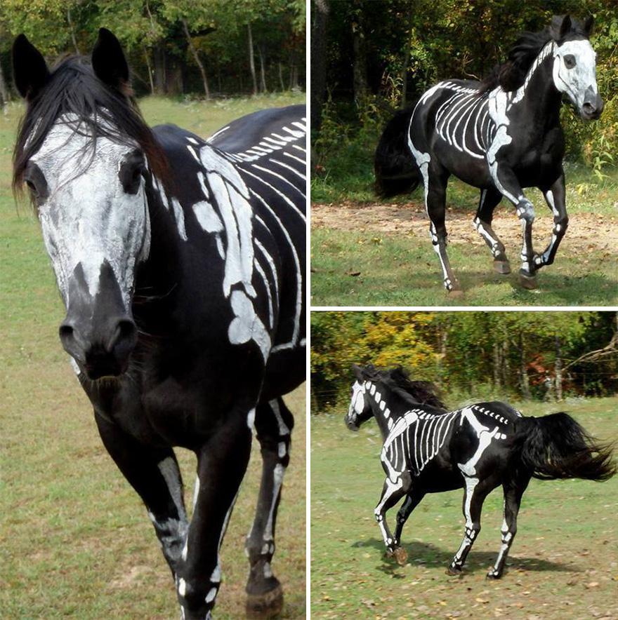 Uso não-tóxico de pintura para transformar animais esqueletos assustadores para o Halloween (9)