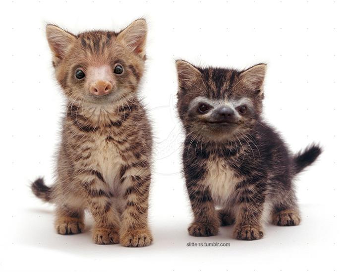 kittens-sloths-combined-slittens-31