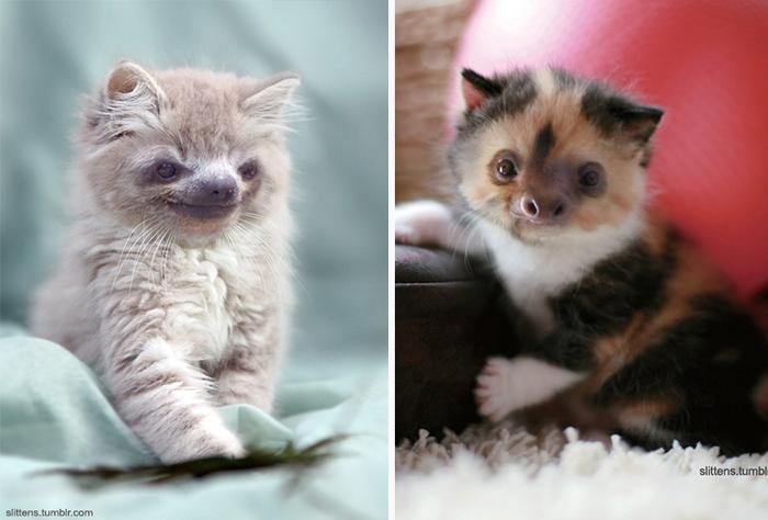 kittens-sloths-combined-slittens-38