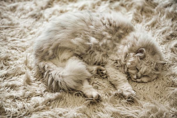 15-Animais-que-são-mestres-da-camuflagem-Blog-Animal (10)