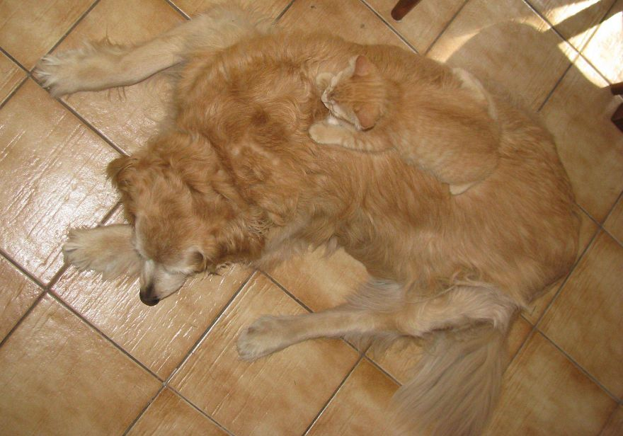 15-Animais-que-são-mestres-da-camuflagem-Blog-Animal (4)