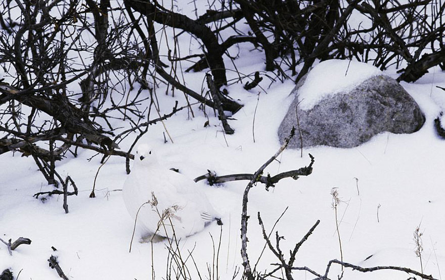 15-Animais-que-são-mestres-da-camuflagem-Blog-Animal (5)