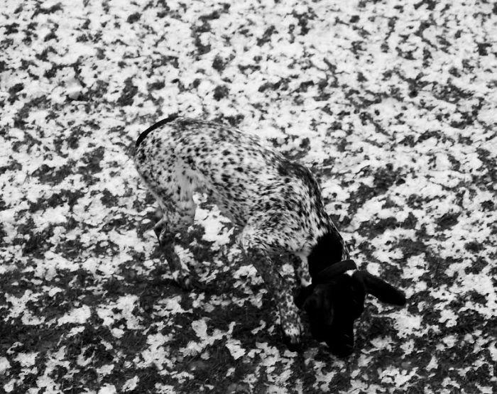 15-Animais-que-são-mestres-da-camuflagem-Blog-Animal (7)