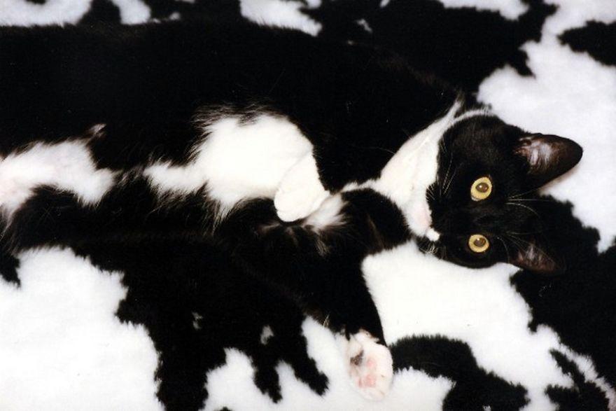 15-Animais-que-são-mestres-da-camuflagem-Blog-Animal (9)