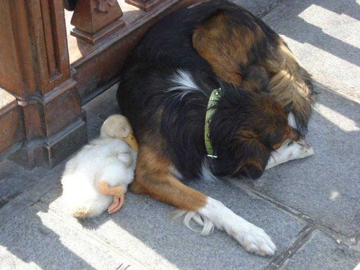20-Amizades-incomuns-entre-animais-que-são-absolutamente-adoráveis-Blog-Animal (1)