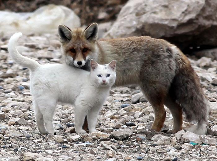 20-Amizades-incomuns-entre-animais-que-são-absolutamente-adoráveis-Blog-Animal (12)