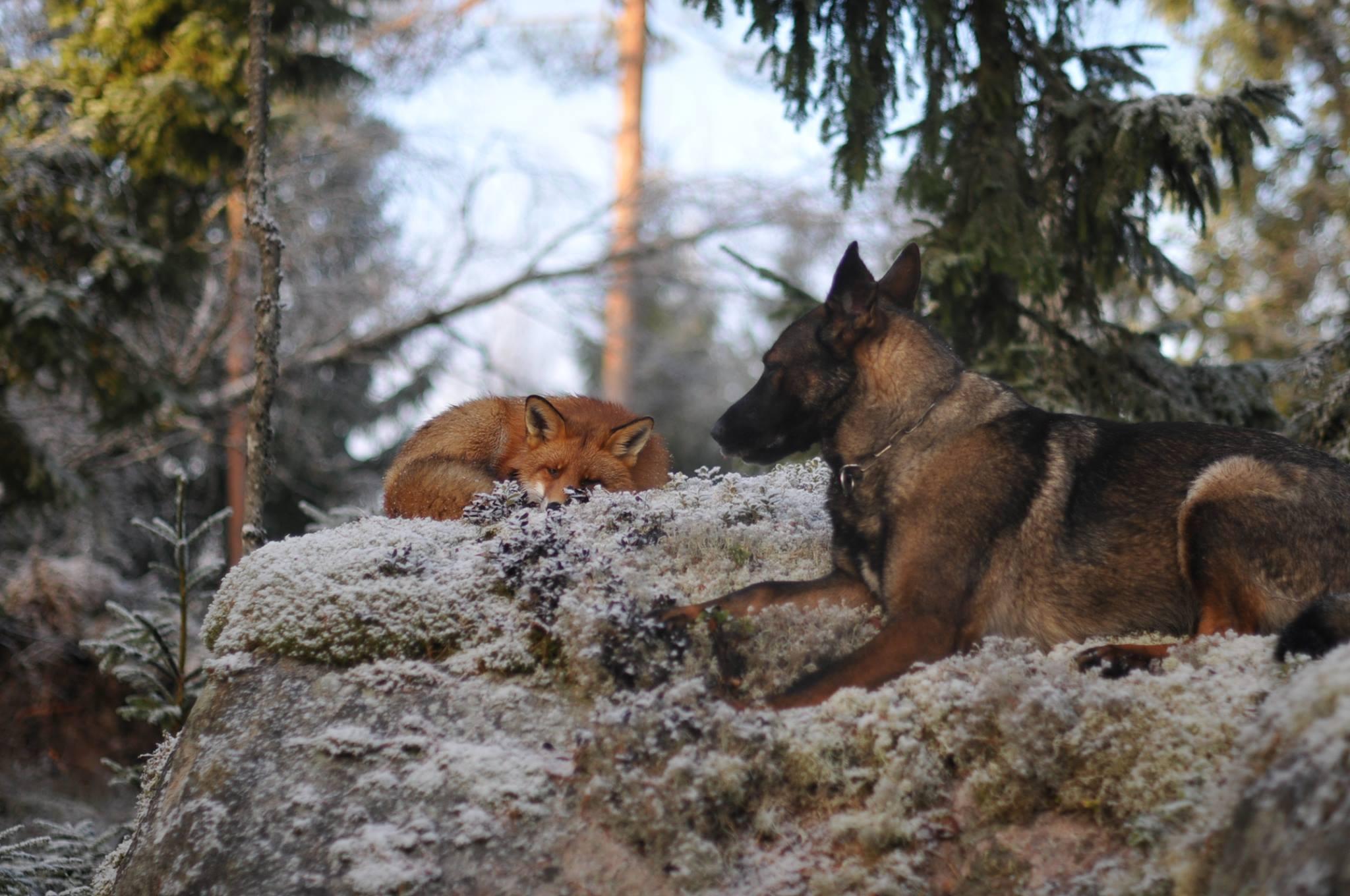 20-Amizades-incomuns-entre-animais-que-são-absolutamente-adoráveis-Blog-Animal (14)
