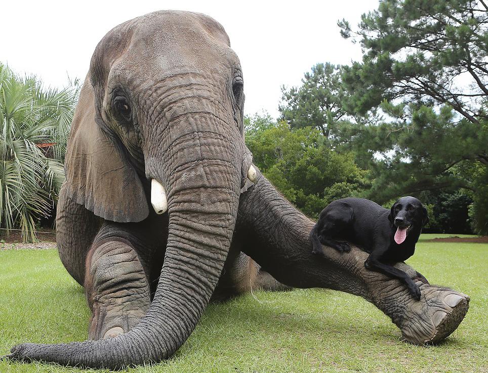 20-Amizades-incomuns-entre-animais-que-são-absolutamente-adoráveis-Blog-Animal (15)