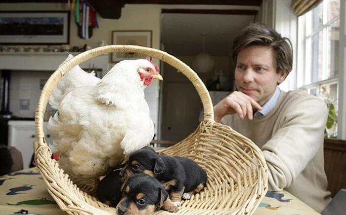 20-Amizades-incomuns-entre-animais-que-são-absolutamente-adoráveis-Blog-Animal (17)