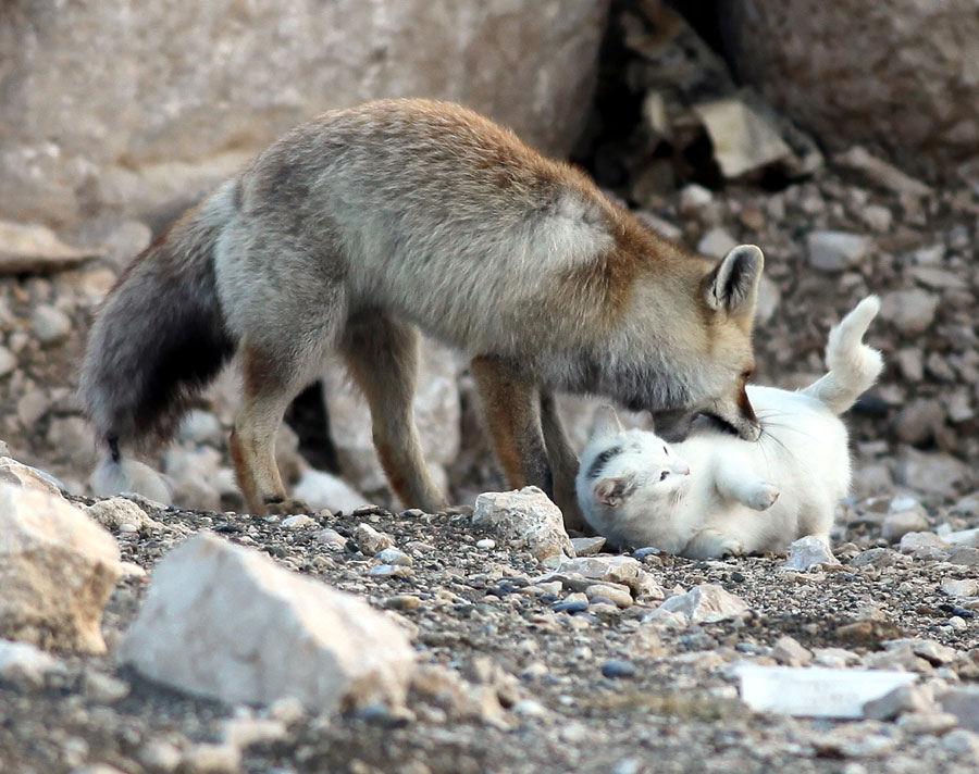 20-Amizades-incomuns-entre-animais-que-são-absolutamente-adoráveis-Blog-Animal (18)