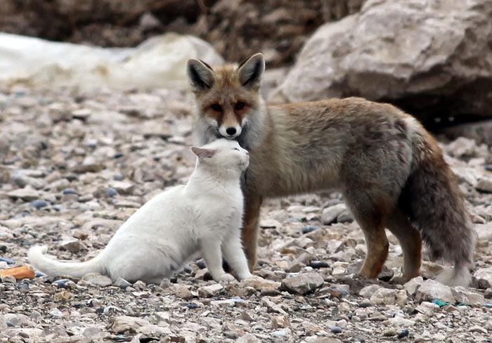 20-Amizades-incomuns-entre-animais-que-são-absolutamente-adoráveis-Blog-Animal (19)