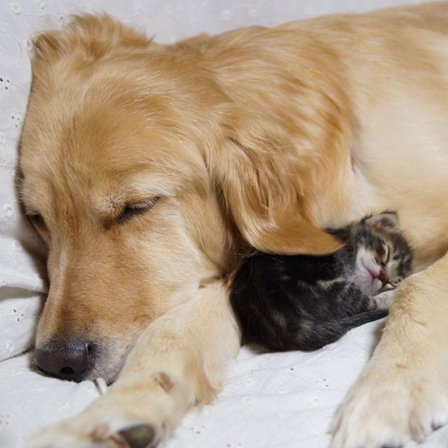 20-Amizades-incomuns-entre-animais-que-são-absolutamente-adoráveis-Blog-Animal (2)