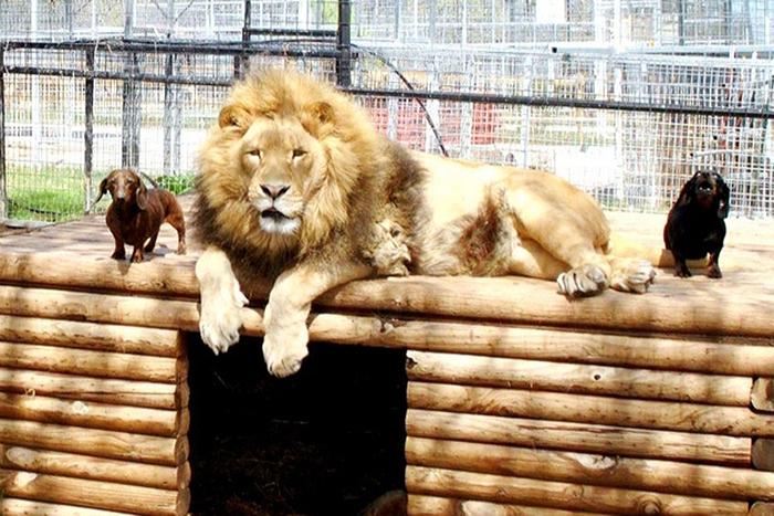 20-Amizades-incomuns-entre-animais-que-são-absolutamente-adoráveis-Blog-Animal (20)