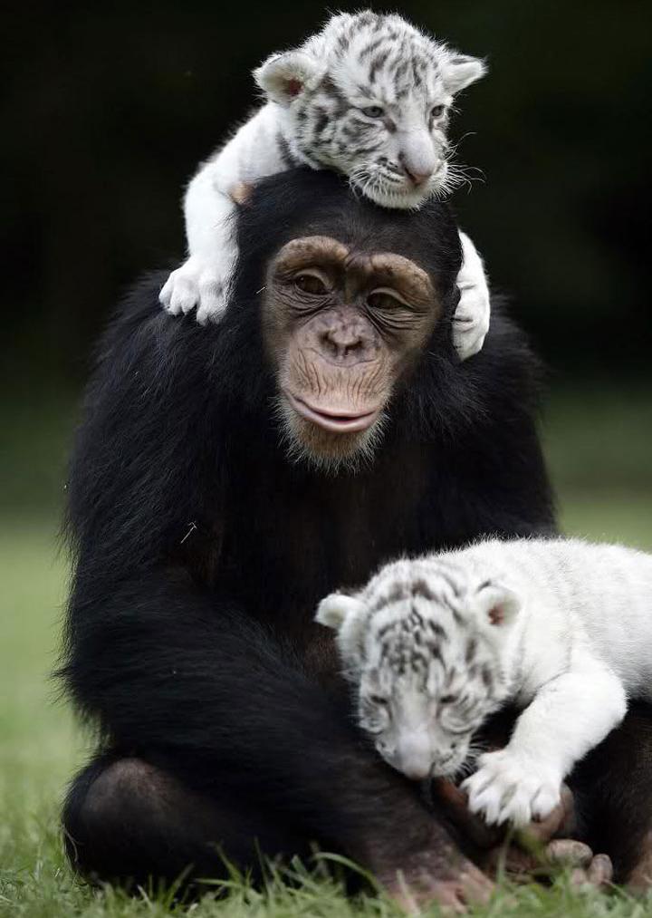 20-Amizades-incomuns-entre-animais-que-são-absolutamente-adoráveis-Blog-Animal (21)